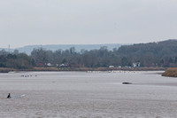 12-Severn Bore - Epney - 22nd Mar 2019-_MG_0951